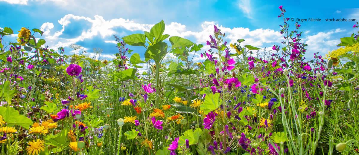 Gartenplanung für kleine Natur-Gärten